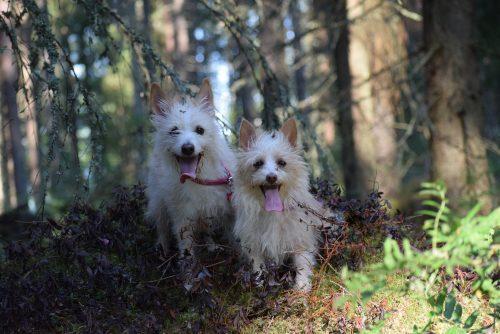 04/20 Sandeisan Joia ja Gelert´s Ella-Fitzgerald ©: Tarja Kokkonen