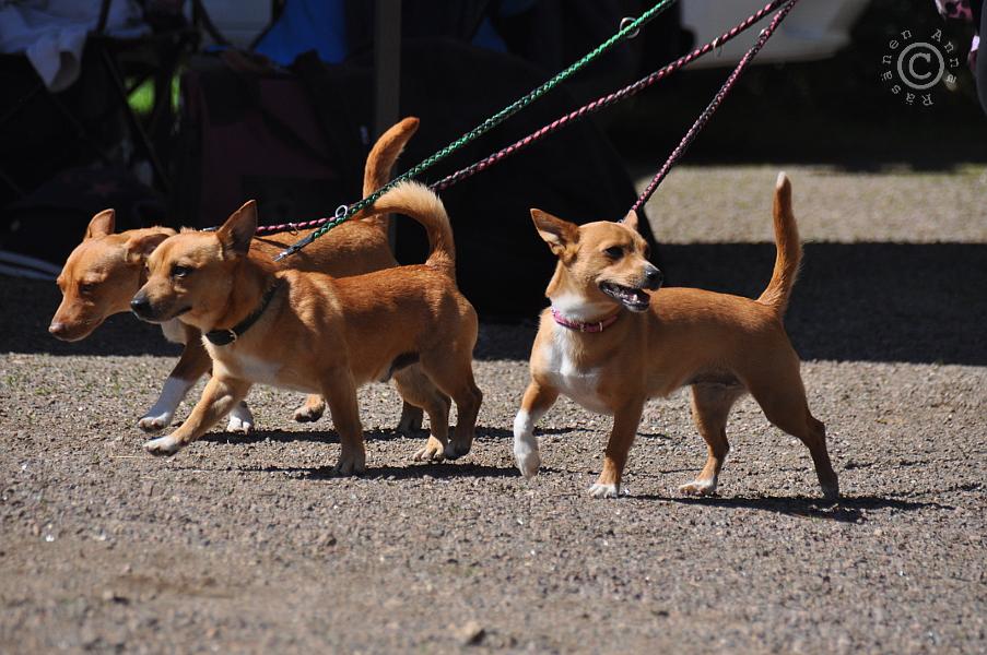 Koiria osallistui vähintään tuplasti enemmän kuin ihmisiä. Kuva Anna Räsänen.
